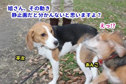 あんこ 5