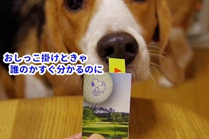 ゴルフ 6