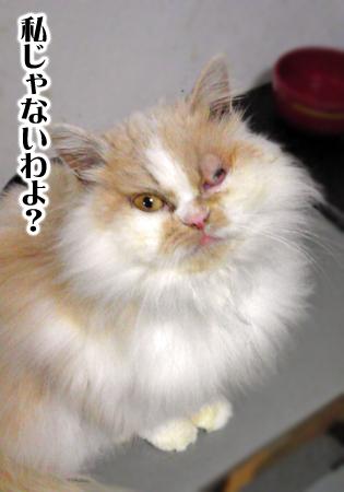 ぶーこ2013.2.13