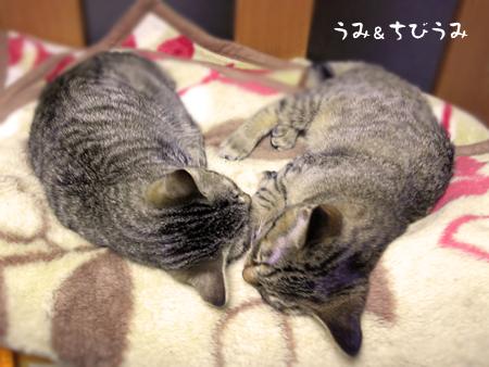 うみちびうみ2013.2.25①