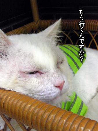 火傷猫20130323②