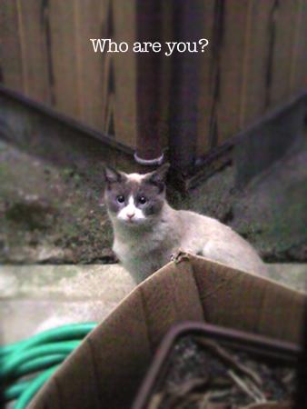 野良猫2013.4.16②