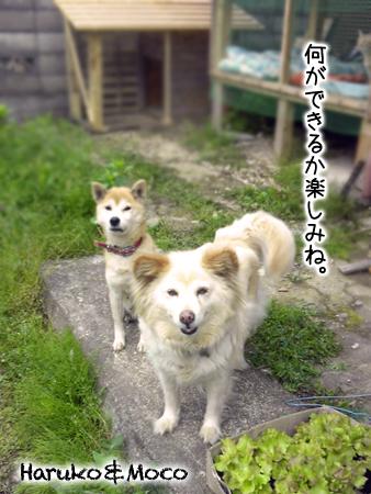 春子モコ2013.5.2