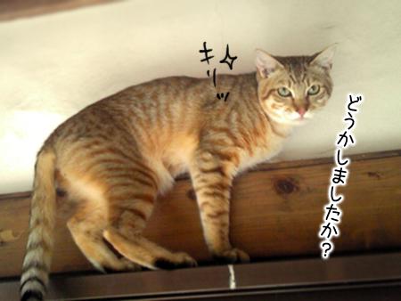 陸2013.5.6②