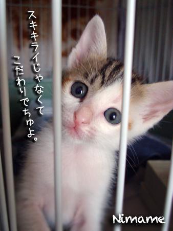 にまめ2013.5.21