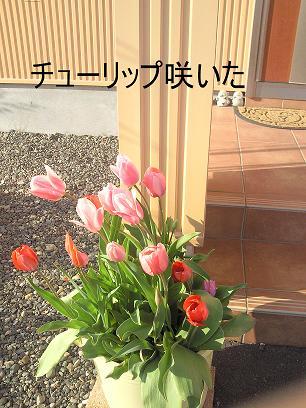 NEC_0165.jpg