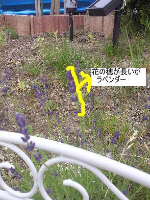 NEC_0217.jpg