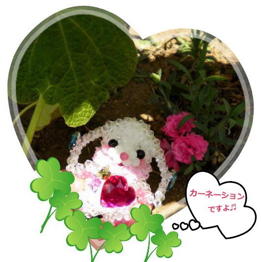 花ブ2013512-1