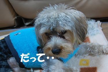 dog408.jpg