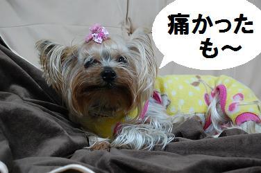 dog409.jpg