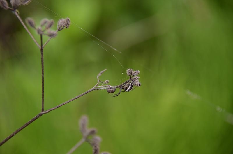 ヤブジラミと蜘蛛