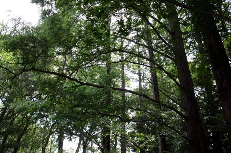 樹木2-1