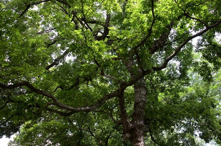 樹木4-2