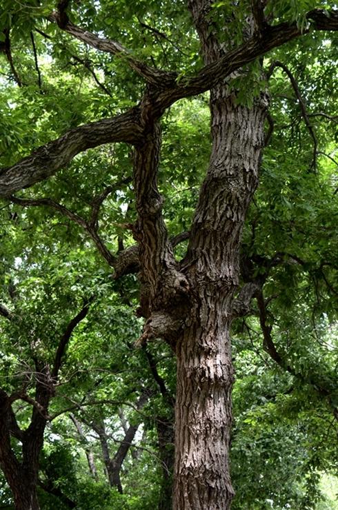 樹木5-1