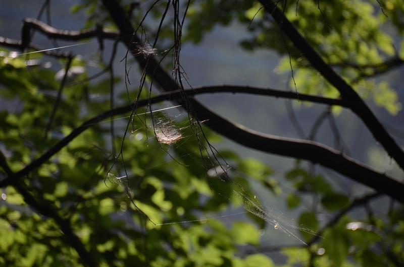 蜘蛛の巣1