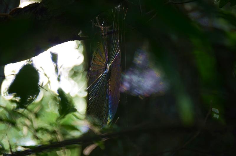 蜘蛛の巣6