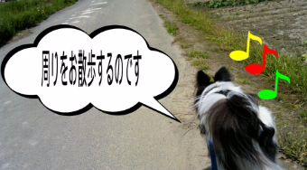 お散歩しまーす!