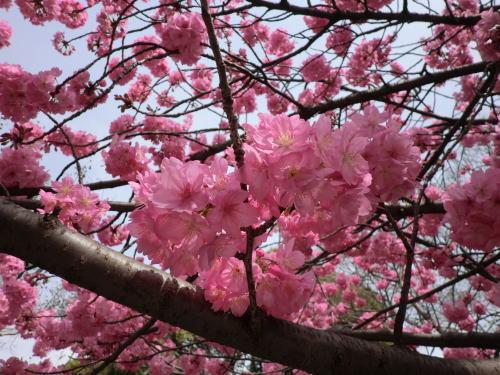 flower20130320_3