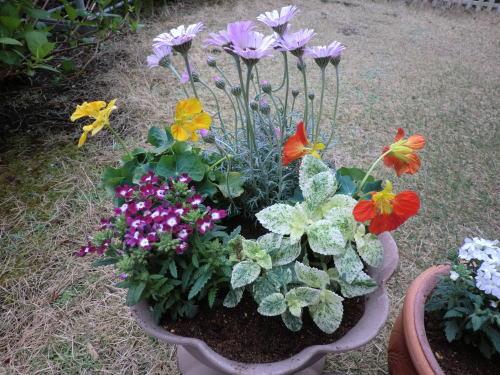 gardening_20130331_3