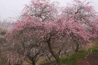 梅の里公園