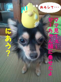 ぷりん と ピヨちゃん