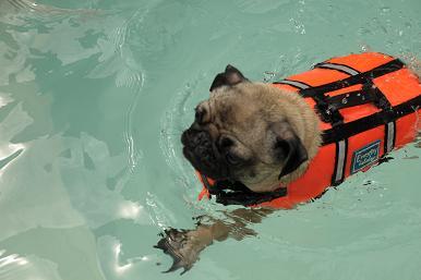 余裕な泳ぎ
