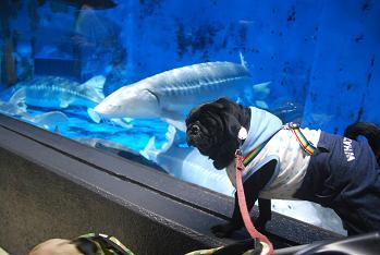 サメとりき