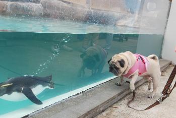 泳ぎ上手いわね