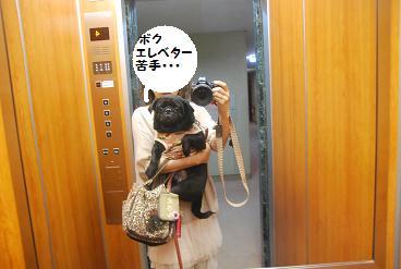 エレベーターが怖いんだ~