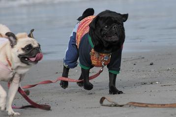 砂浜って楽しいね