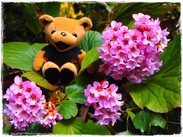 アジサイみたいな花(^◇^)