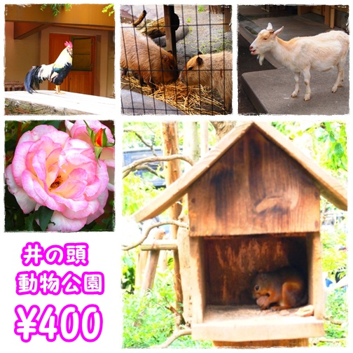 井の頭動物公園1