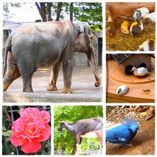 井の頭動物公園2