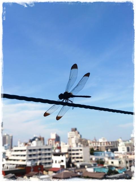 2012-09-05会社にて