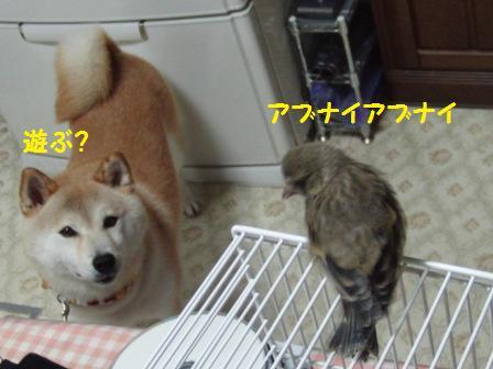 くるみとチュン太郎