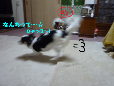 2013320-7.png