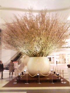 ガーデンズ 桜 夜 130322_2059~001