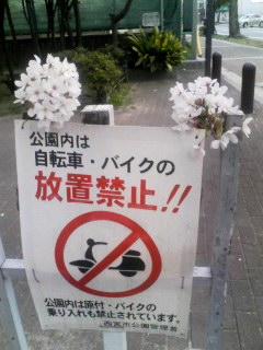 桜 標識上 130401_1718~001