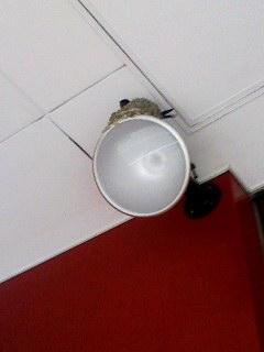 ツバメの巣 130521_0700~001