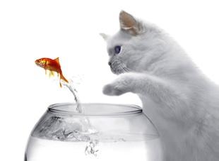 にゃんこと金魚