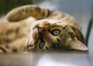 猫_2ブログ用