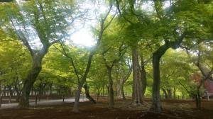 東福寺 新緑
