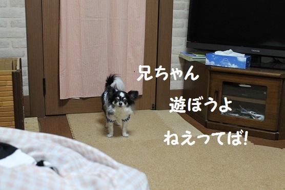 IMG_4919.jpg