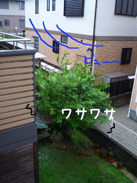 台風の1x
