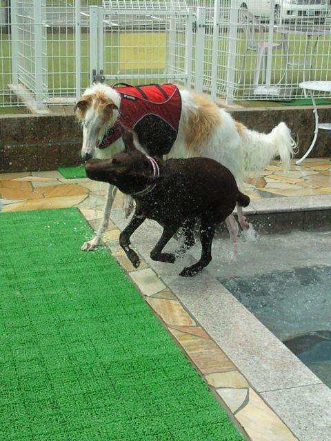 ビー君とプール2