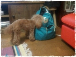 20130712-224151LaLa&bag