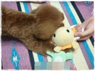 20130712-224230tarutoおもちゃ2