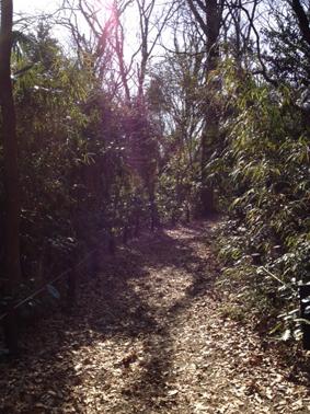 自然教育園⑧