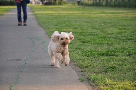 GW(川とふれあい公園)ー飛行犬