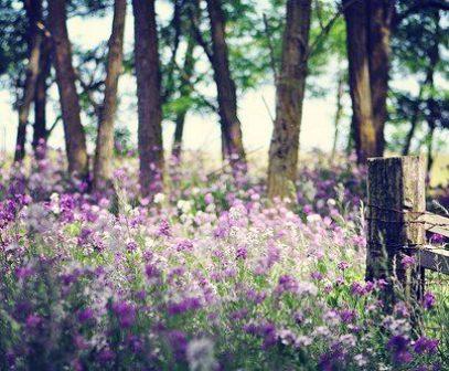 1301flowere2_flowerstory_1943332592_n.jpg